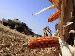 Европарламент вводит новые правила для ГМО-культур