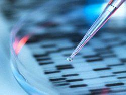 Ученые вырастили желудок человека в лаборатории