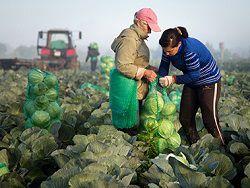 Глава правительства обещал субсидировать ставку сельхозкредитов