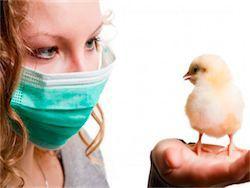 В Египте 11 человек заболели птичьим гриппом