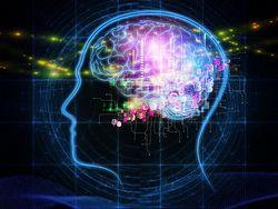 Биологические ритмы человека влияют на всю его жизнь